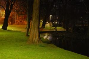 Ganzen in Park Oog in Al 's nachts