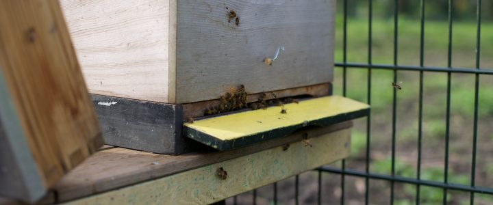 Bijen in het park